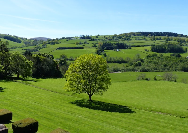 View from the Buckland Hall Retreat Centre window of tree and green hills beyond