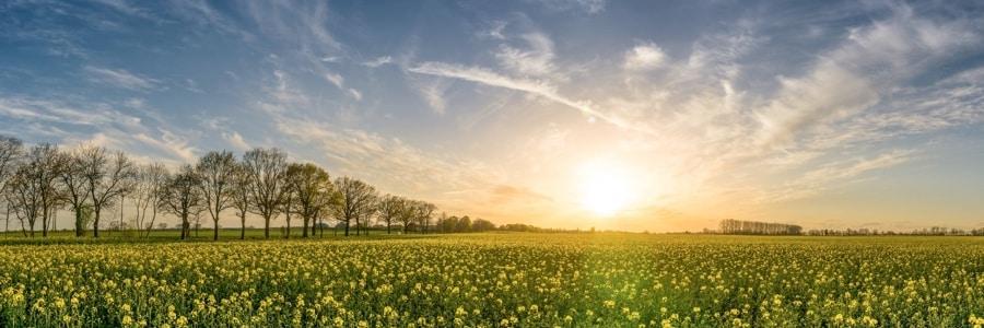 dawn on a field